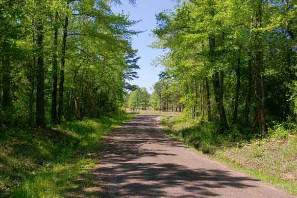 24.3-east-texas-piney-woods-path